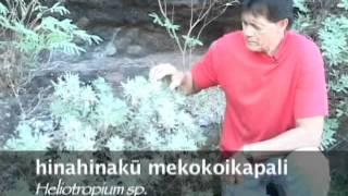 La`au Lapa`au: Traditional Hawaiian Herbal Healthcare