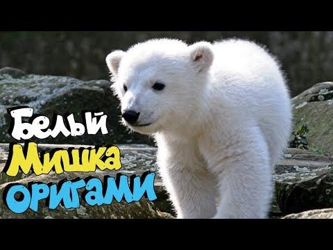 Белый мишка оригами (Почему белые медведи не едят пингвинов?)