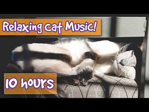 Relaxing Cat Music with Sound Effects! Purring, Suckling and Nature Sounds in Soothing Cat Music!