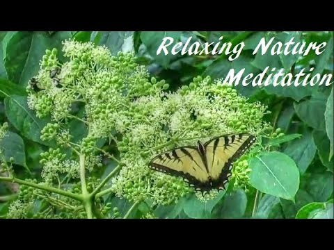 Pollination - A Nature Meditation