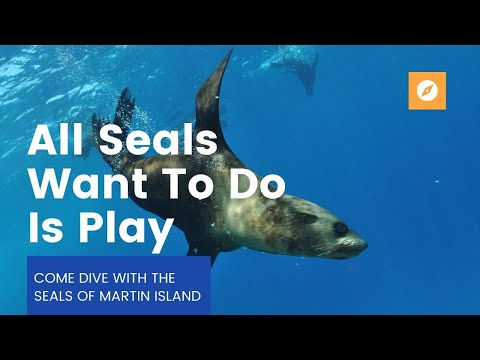 Scuba Dive With Seals