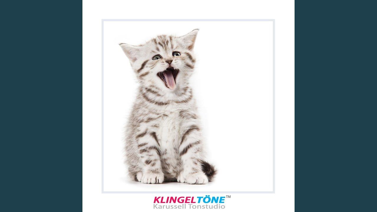 Miau Klingelton Susse Katze Sound Fur Handy Feat Katzen Jammer