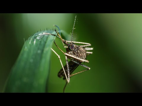 Dengue Virus: A Diagnostic Testing Update