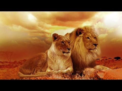 Relax & ChillOut Music 2017 by Dj BioFire.