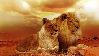 Relax & ChillOut Music 2016 by Dj BioFire.