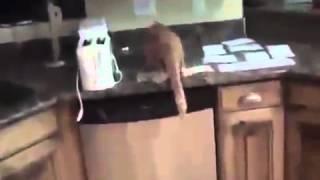 Как отучить кота лазить на стол! Прикол!