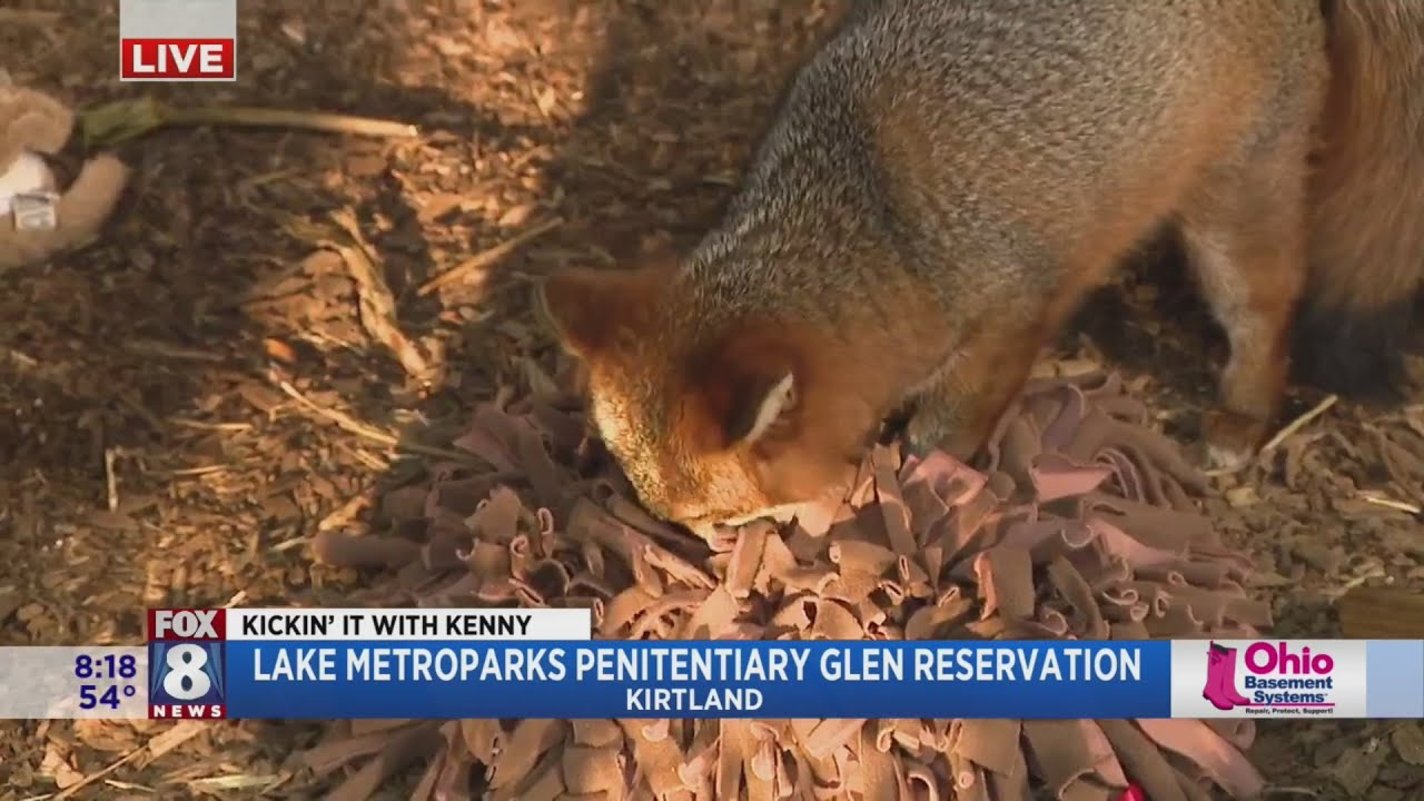 Kenny learns why wildlife rehab includes both physical and mental stimulation