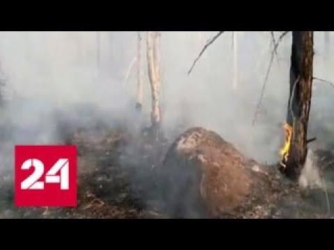 Хабаровск накрыл густой дым: на юге региона горит сухая трава и лес
