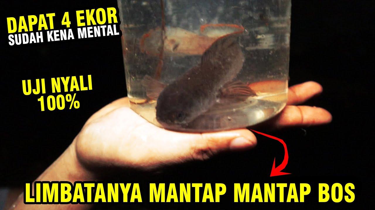 Download BERBURU LIMBATA DI SUNGAI ANGKER! KABUR PENGHUNINYA MARAH...