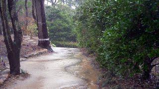 자연이 주는 진정효과, 천리포 수목원 숲길의 비오는 풍…