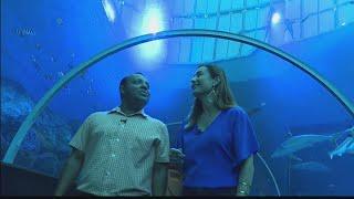 Singapore Week: S.E.A. Aquarium