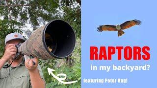 Backyard Birding - Episode 4: Birds of Prey