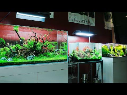 Amazing Aquascapes at Aquaeden - Nature Aquarium Store