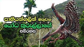 පාහියන්ගලින් මතුවන යෝධ කුරුල්ලාගේ අබිරහස - Pahiyangala Cave In Bulathsinhala