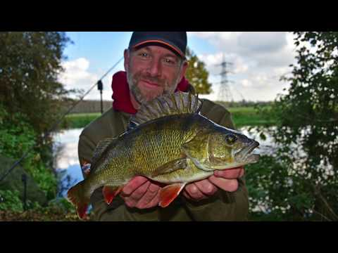 Paul Elt Perch Fishing On The River Great Ouse