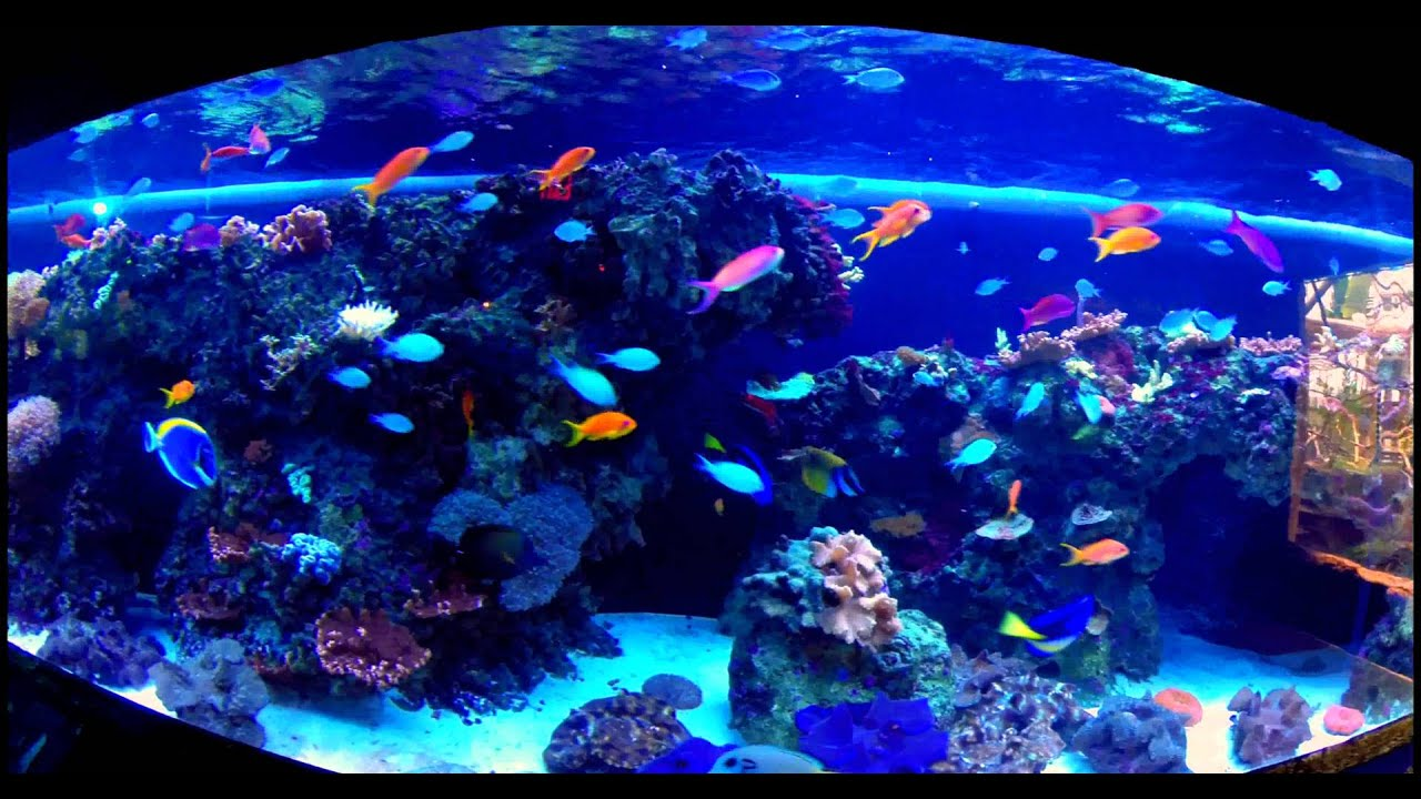 Aquarium 4k Wallpaper Aquarium Fishes 2017 Fish Tank