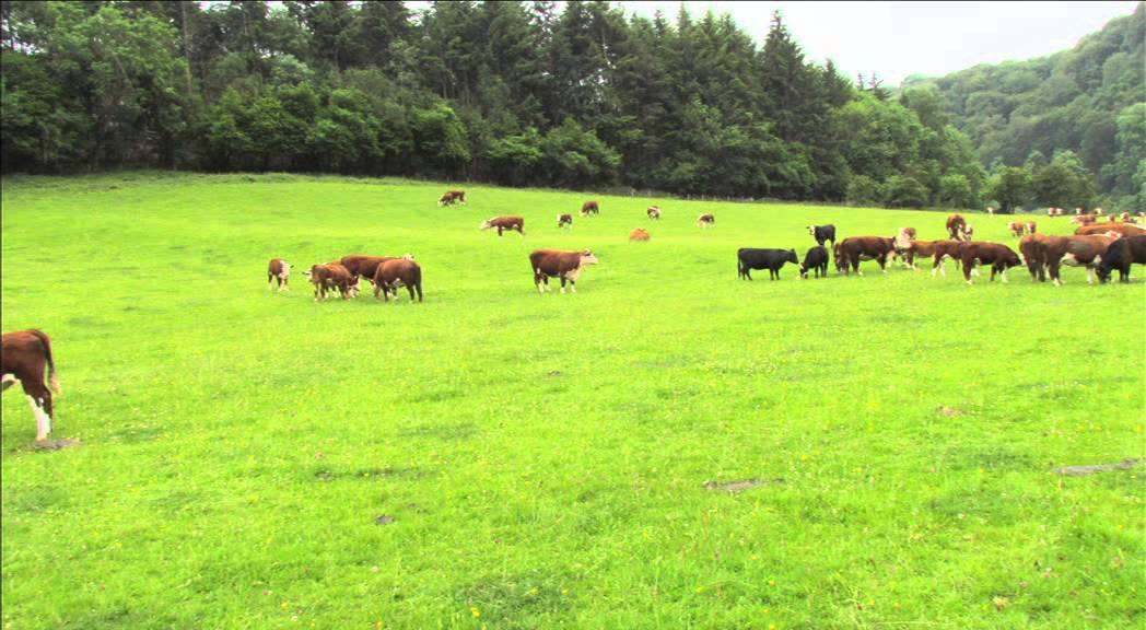 Model Farm Ross On Wye Youtube