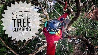 SRT Tree Climbing  ivy cut of new training camphor tree