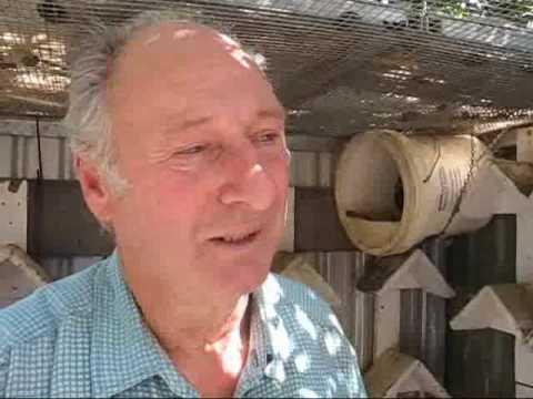 Racing Pigeons from South Australia Alan Brown Par...