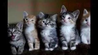 ЛУЧШИЕ ютуб видео приколы Смешные Кошки #2 //   Funny Animal Videos