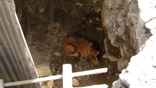 Street dog rescued from pit at construction site