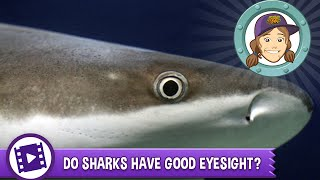 Ask Tierney - Do sharks have good eyesight?