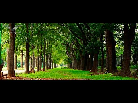 Cubbon Park Bangalore | Garden City Bengaluru | Cubbon Park Covid19 Lockdown | Bangalore Tourism| 4K