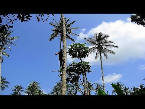 Hakuna Matata - Welcome to Zanzibar