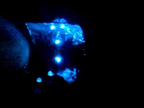 LED flasher DJ JM