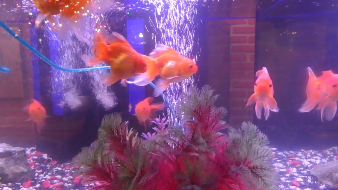 Fish aquarium and good luck -