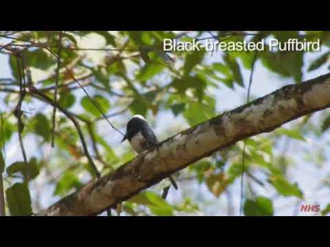 Central American Tropics - Birds #1 - Part III