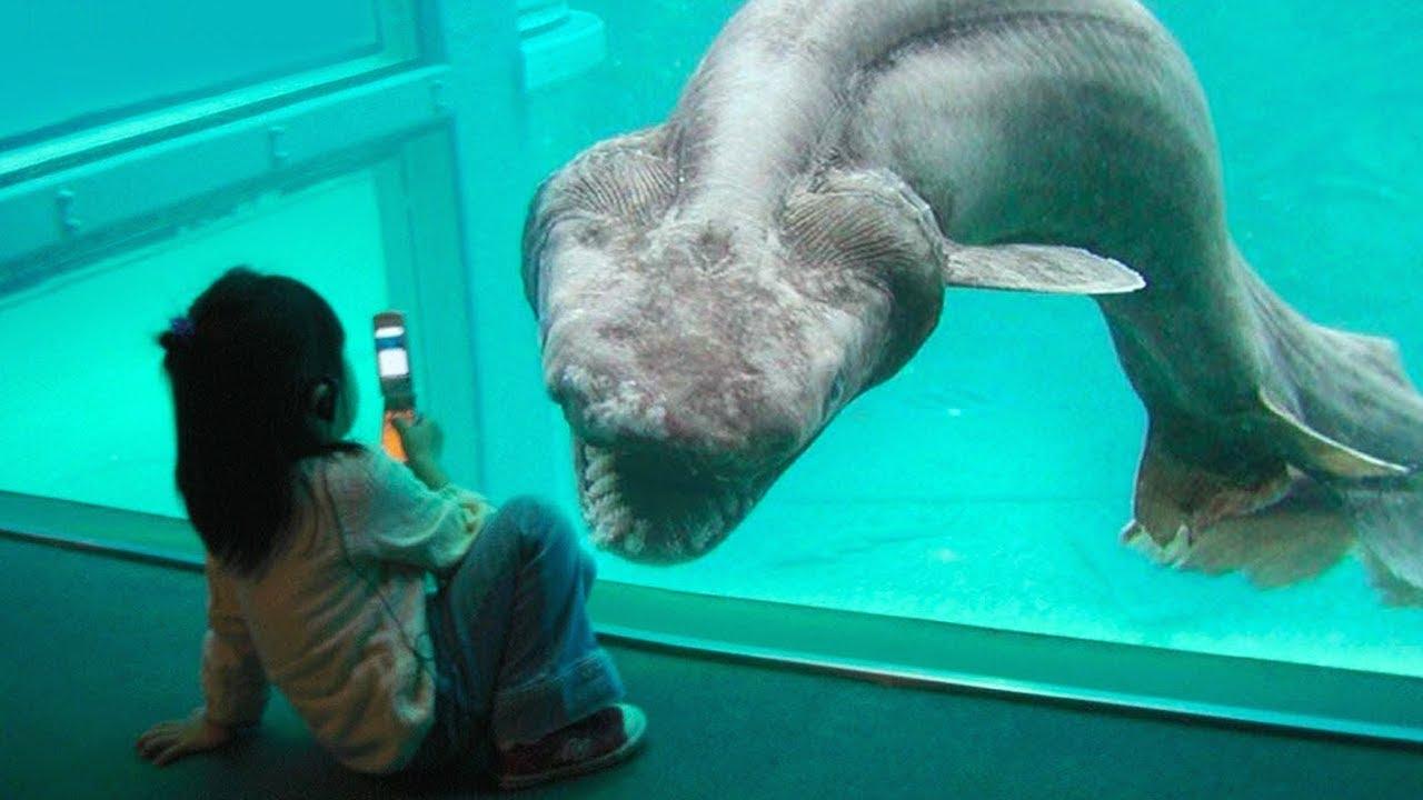 15 Especies De Tiburones Más Raras Escondidas En El Océano