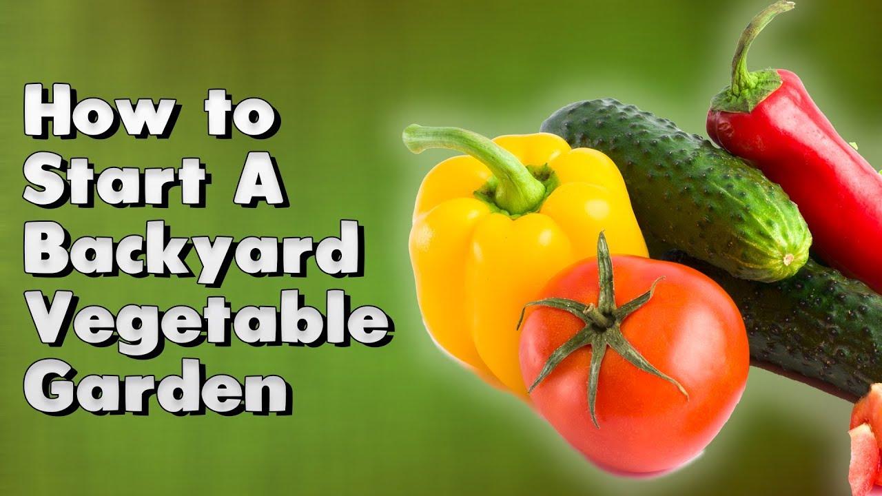How To Start A Backyard Vegetable Garden Youtube