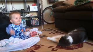 Funny Baby Video 😛 😜 😝 Baby and Cat Playing Together Fails 👉🏽 Funny Baby Video🧸