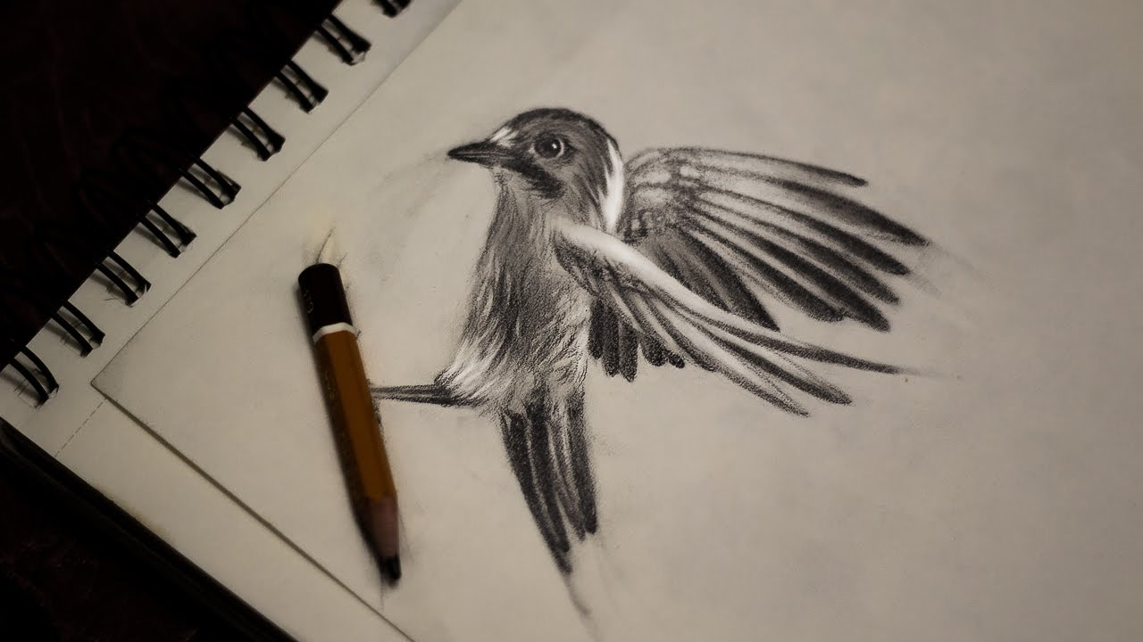 Drawing pencil flying bird