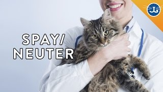 Why You Should Still Spay or Neuter Your Cat & Dog