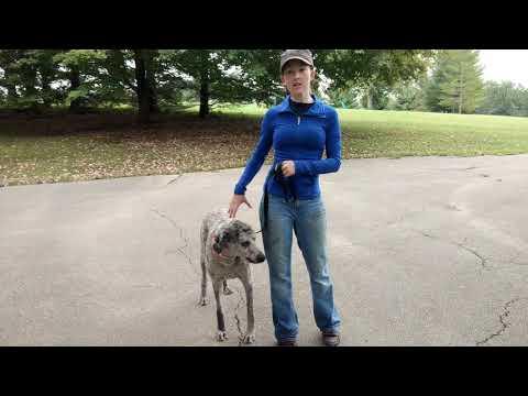 Introducing Prong Collar and Teaching Heel