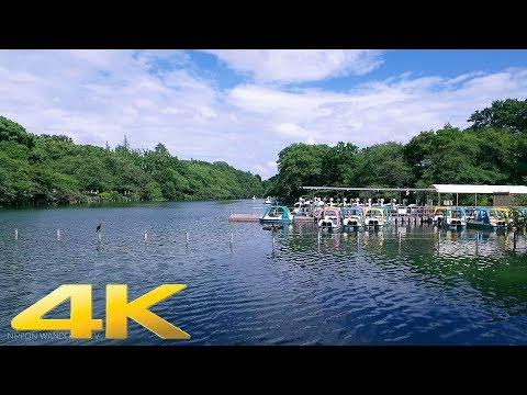 Walking around Inokashira Park, Tokyo - Long Take【東京・井の頭公園】 4K