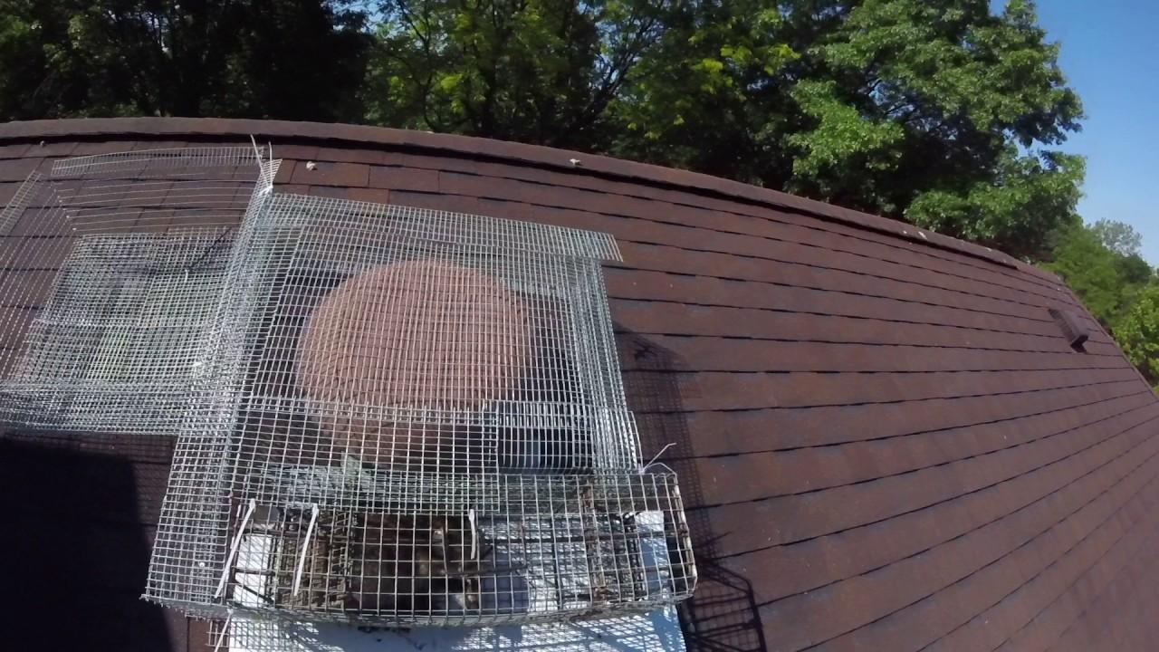 Raccoon Proof Attic Vent Custom Vent Trap Youtube
