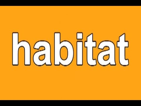 Animal Habitats | Habitats Song | Habitat | Habitat Song for Kids | Jack Hartmann