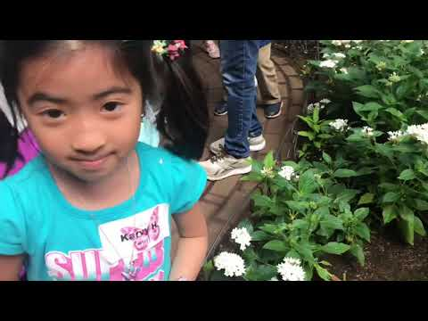 Nashua Elementary School - Field trip to the Butterfly Place!