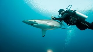 This Secret Scuba Diving Site in Cuba Is One of a Kind