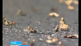 В Оренбуржье в разгаре сенокос