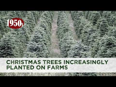 Oh Christmas Tree Facts - YouTube