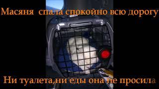Не понравилась слепой кошке Масяне Америка/Как перевезти домашнее животное из России в Америку