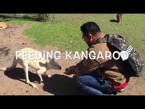 Bagi Makan Kanggaroo I Perth