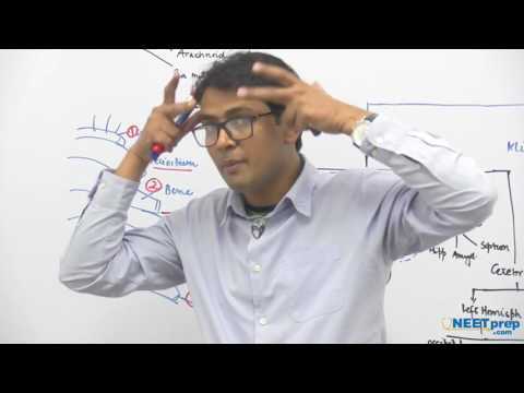 Central Nervous System - Dr. Rajeev Ranjan | NEET AIIMS | Video Lectures