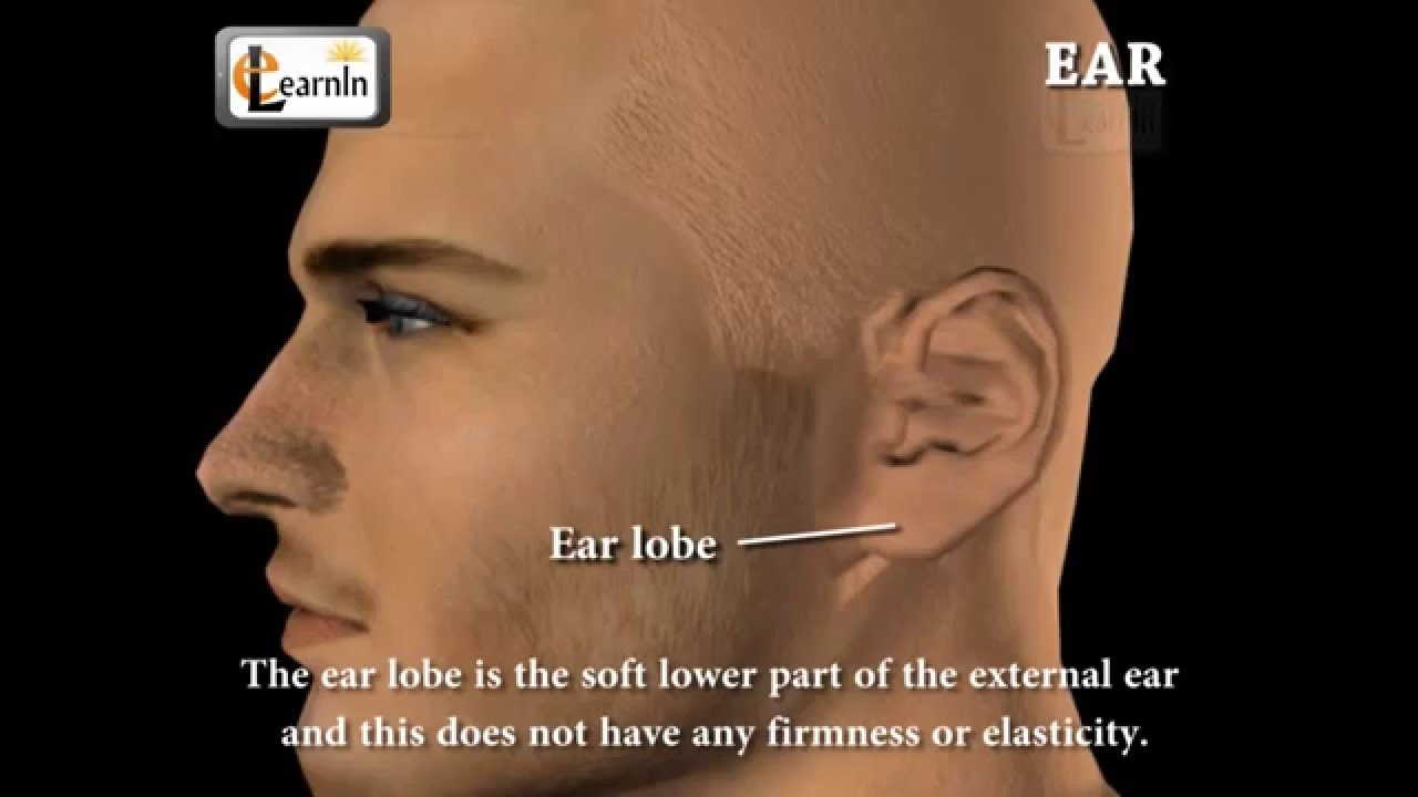Ear Anatomy Inside the ear 3D Human Ear animation video Biology ...