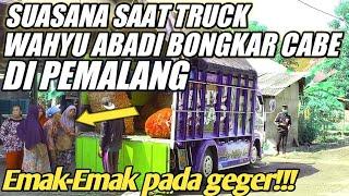TRUCK WAHYU ABADI RENDI ANDIKA BONGKAR CABE DI PEMALANG PERBATASAN TEGAL