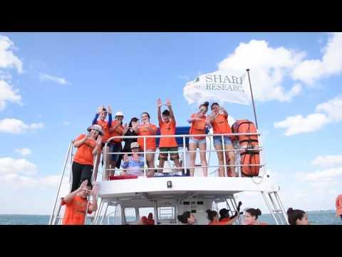UM Shark Research & Conservation Program